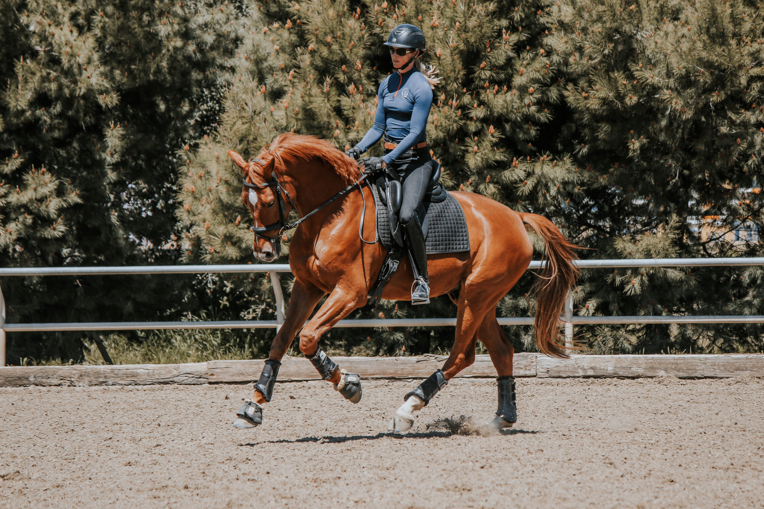 The Trot Canter Transition Amelia Newcomb S Dressage